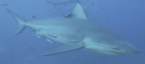 Beqa-Island_Mbenga-Island_Fiji_3D2FJ_DX-News