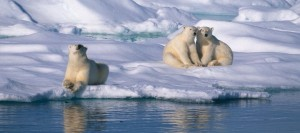 Svalbard_JW-8S5A