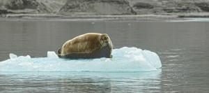 Svalbard_JW4OFA