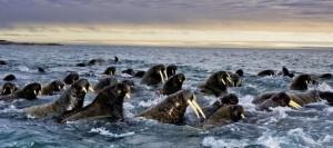 Spitsbergen_JW-W2NAF_JW-K8GU_Tourist