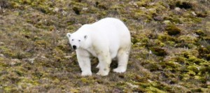 Svalbard_JW6VDA